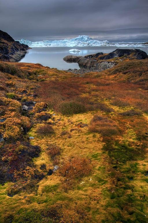 Ilulissat Greenland tundra