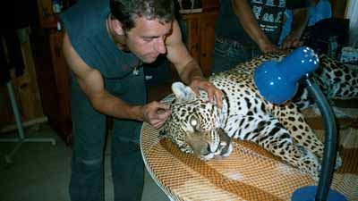 Jaguar Dentistry