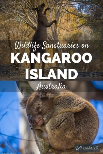 While there is a bounty on many an animal's head in Australia, there are some Kangaroo Island wildlife sanctuaries who give comfort to animals in need.
