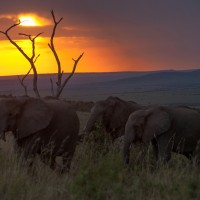 Kenya-Elephant-safari