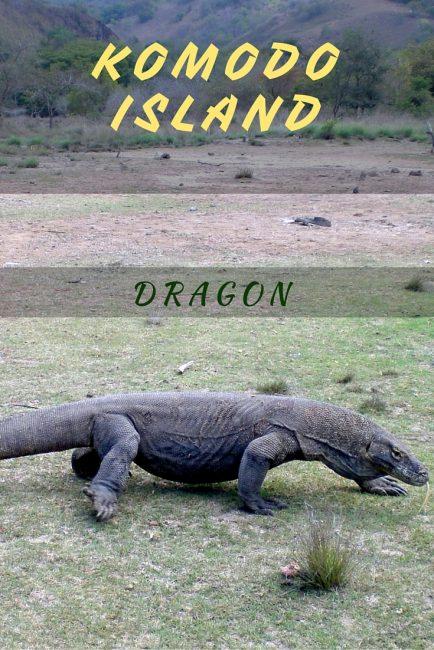 Komodo island tour pinterest
