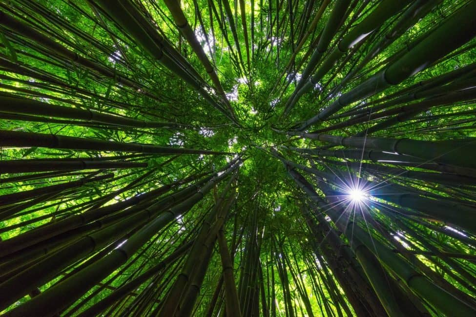 Beautiful Photos of 2015: The Bamboo Forest in Maui