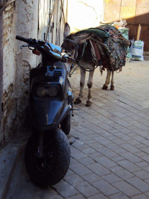 fez-morocco-donkey-motorcycle