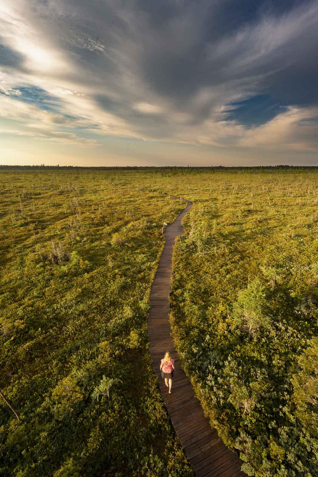 Kouchibouguac National Park walking the bog trail