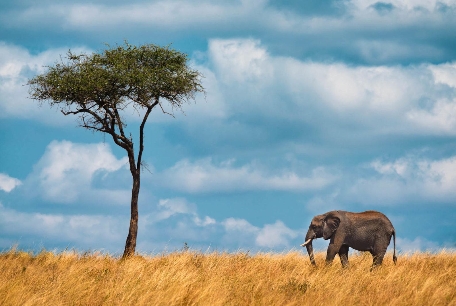 tanzania travel guide elephant and lone tree