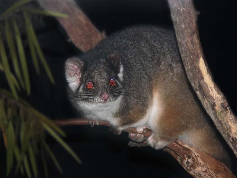 western australia animal encounters