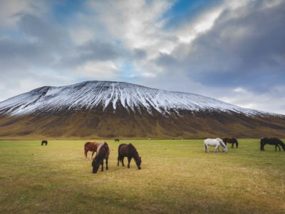 Best of Iceland's Ring Road – GLACIERS, VOLCANOES AND WATERFALLS