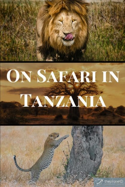 Go on safari in Tanzania to see lions, leopards and extraordinary landscape