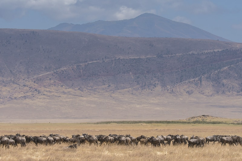 Wildlife in the Ngorogoro Crater