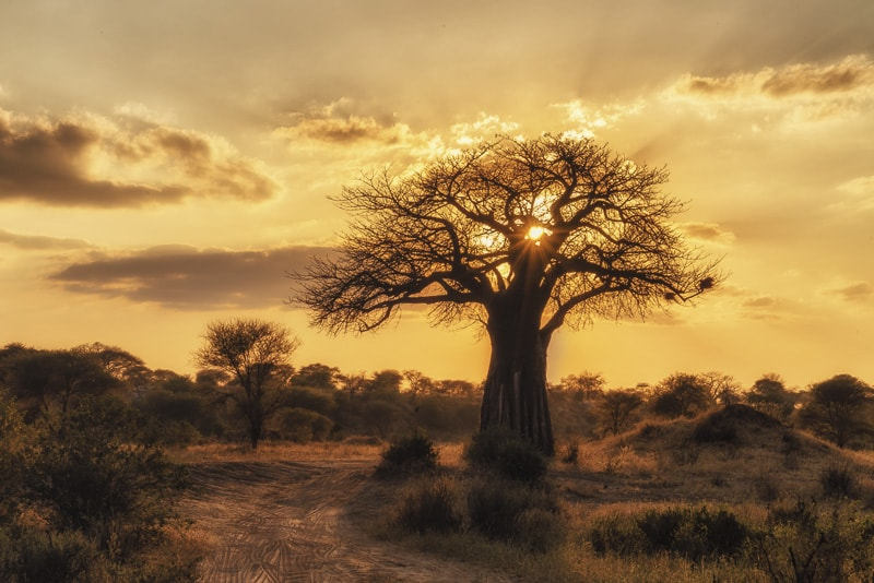Sunset in Tarangire National Park in Tanzania