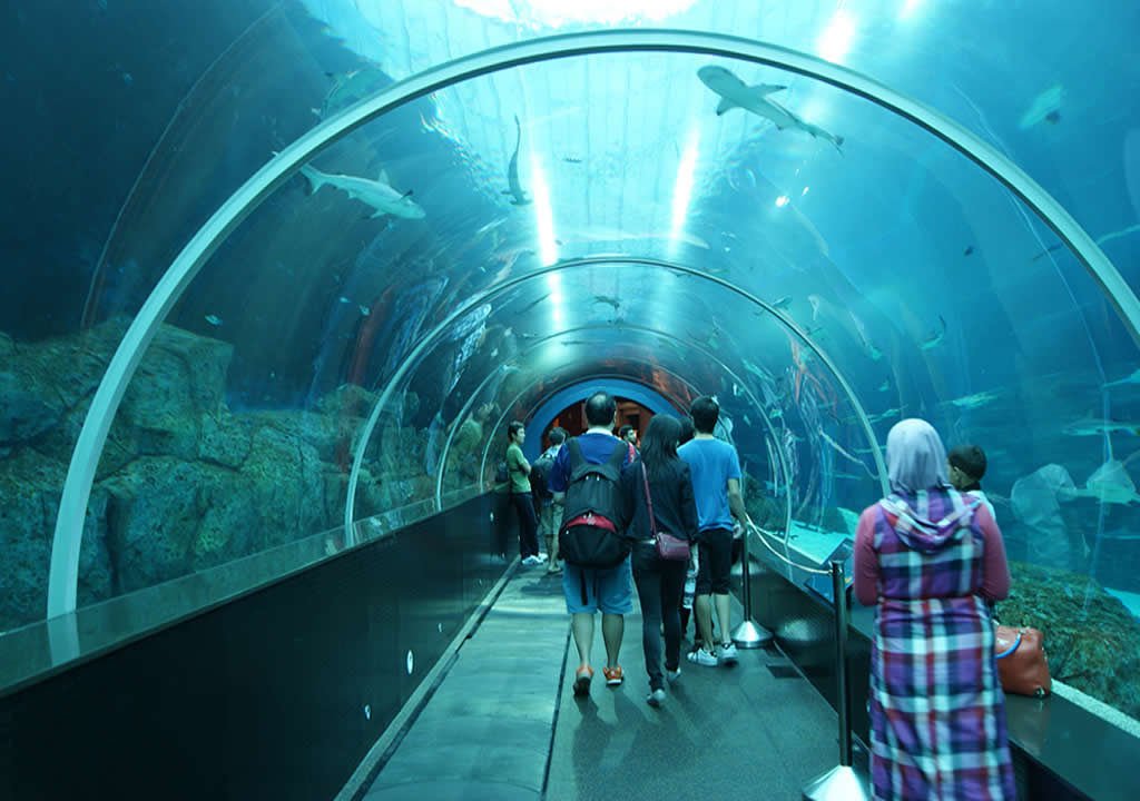 Inside the S.E.A. Aquarium Singapore