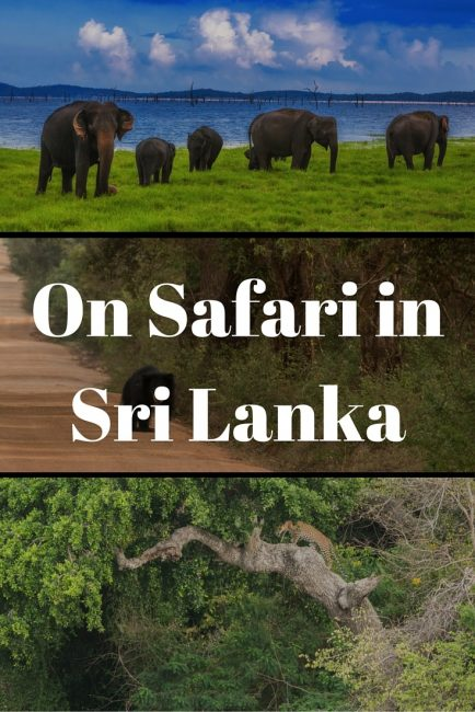 sri lanka safari pinterest