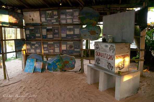 buy souvenir from shop to save sea turtles