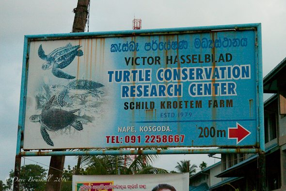 sign to turtle conservation in Sri Lanka