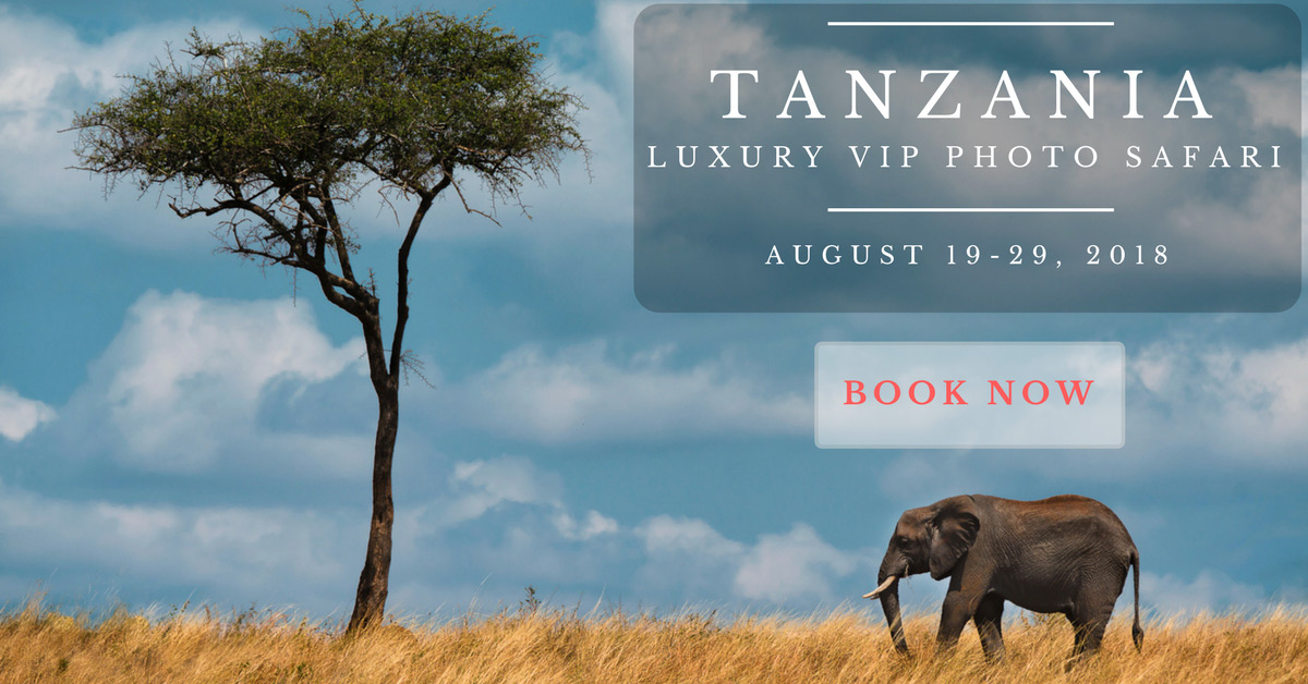 tanzania photo safari 2018 theplanetd