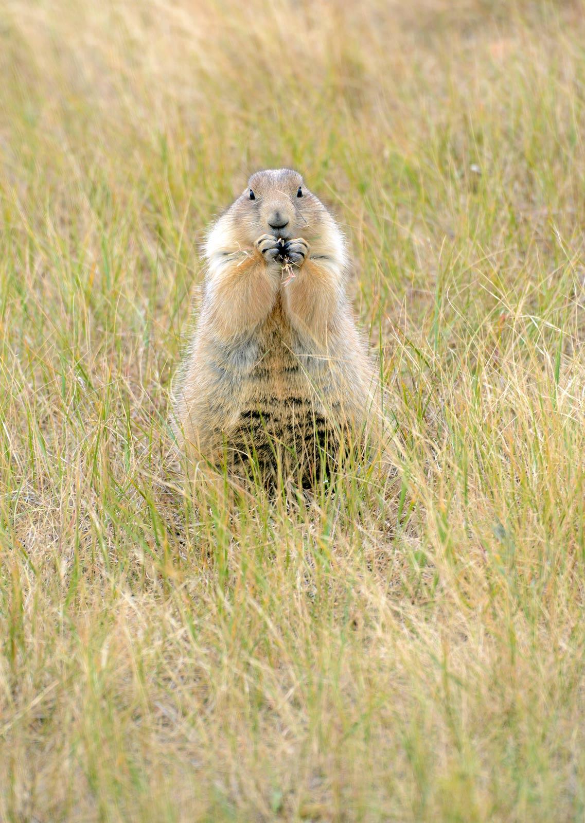 roberts prairie dog town south dakota