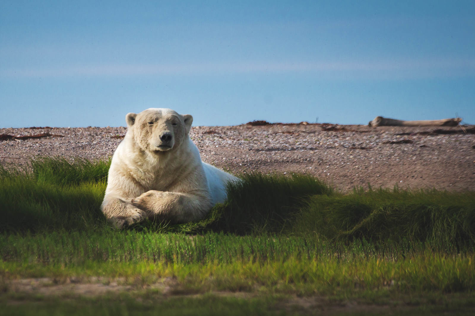 Things to do in Churchill Manitoba