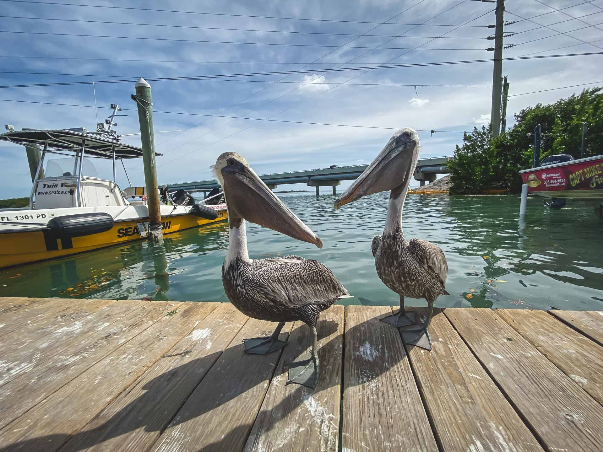 Things to do in Islamorada Florida Keys