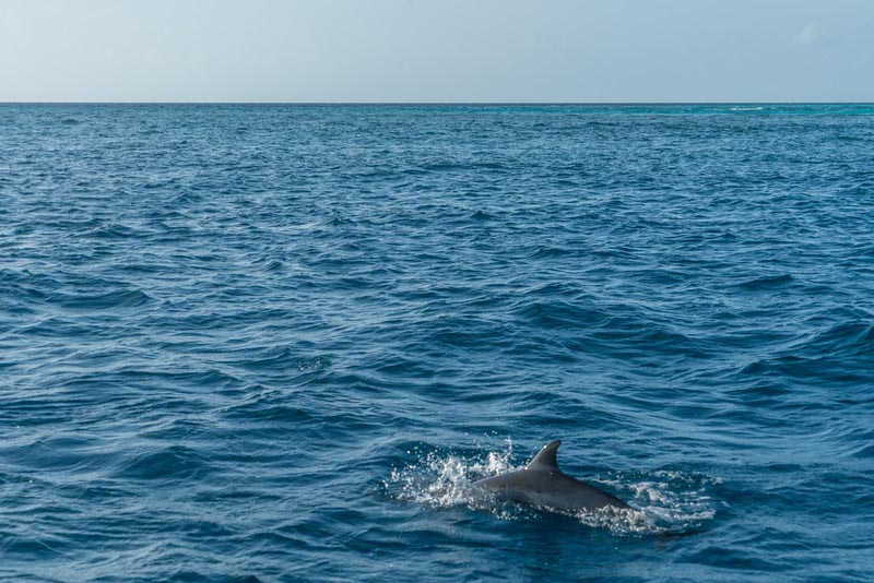 things to do in Maldives wildlife