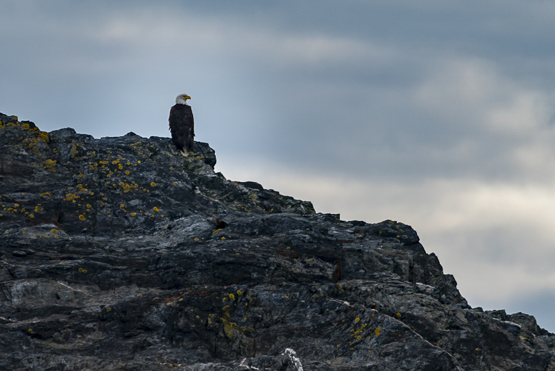 Things to do in Alaska Watching Bald Eagles