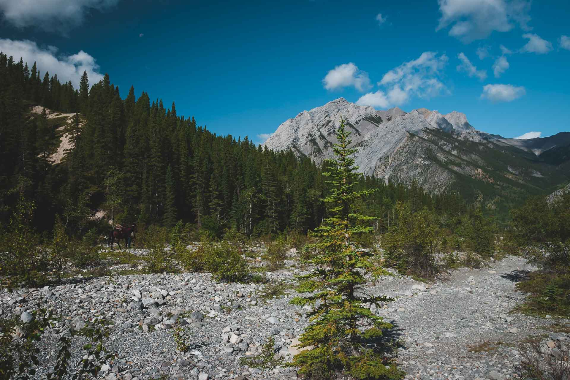 trails of canmore alberta