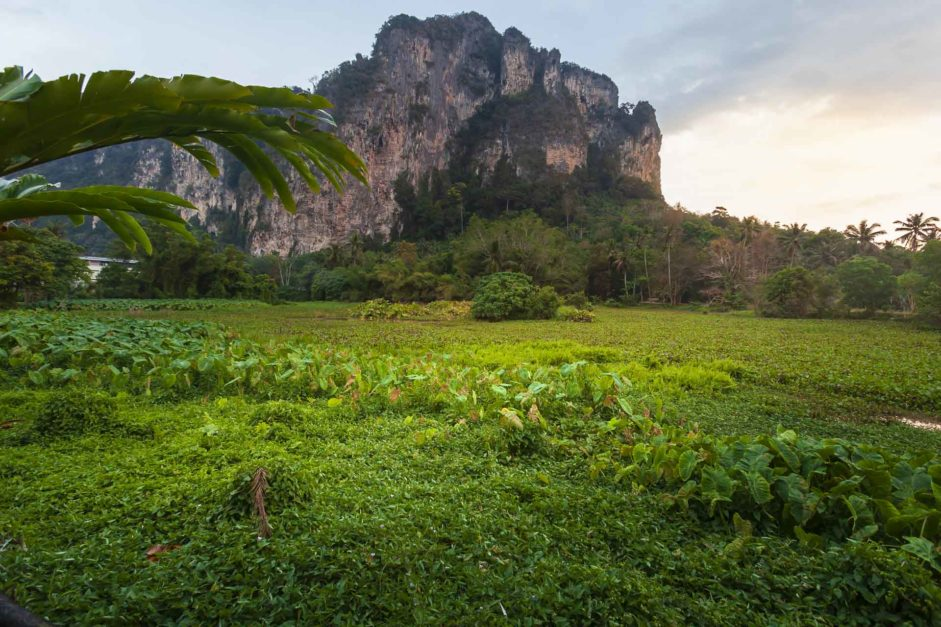 fields in ao nang - krabi attractions
