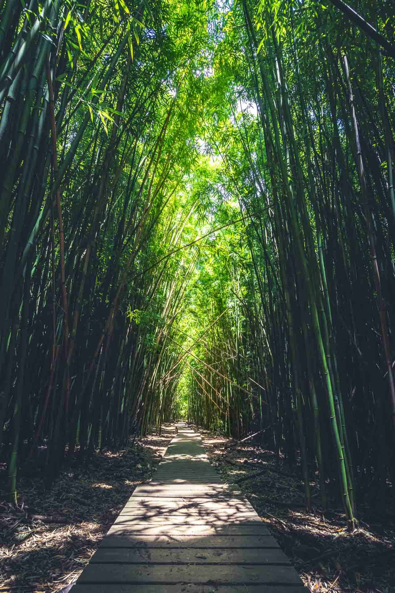 Hike the Bamboo forest in Maui