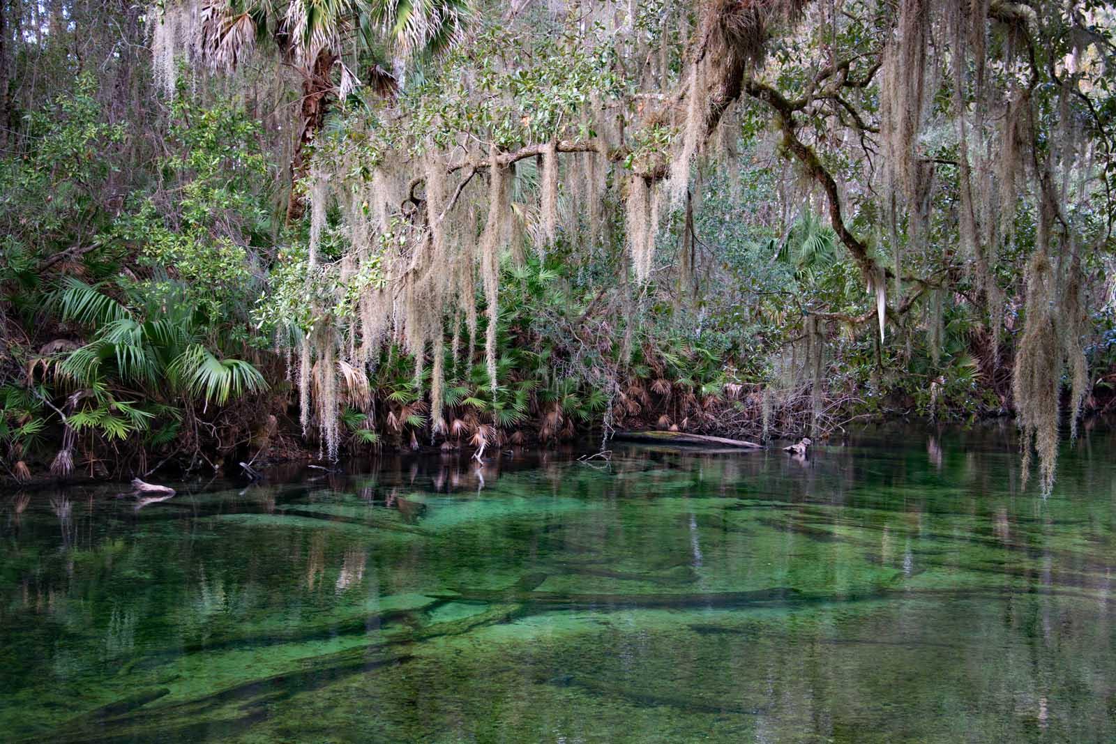 Blue Spring State Park near Orlando Florida