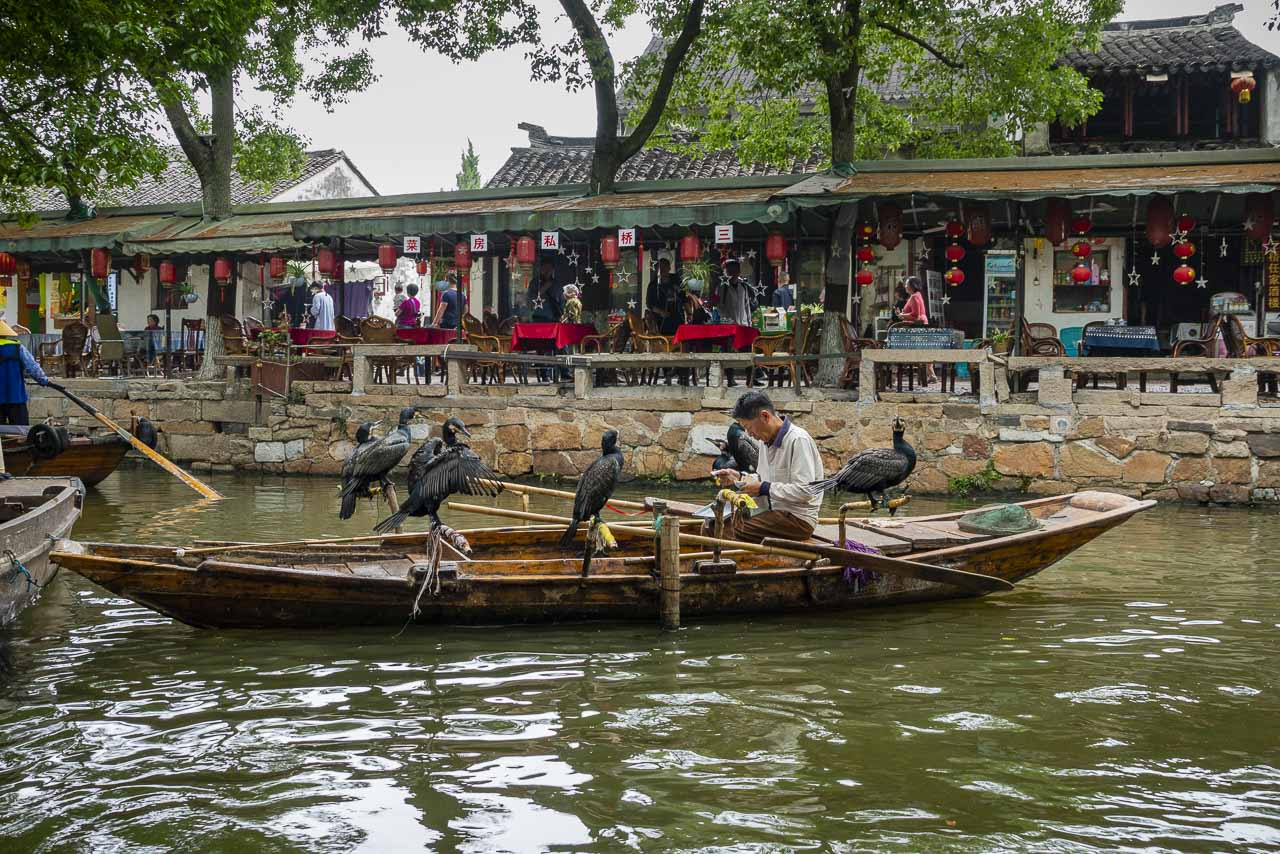 The Birdman of Tongli