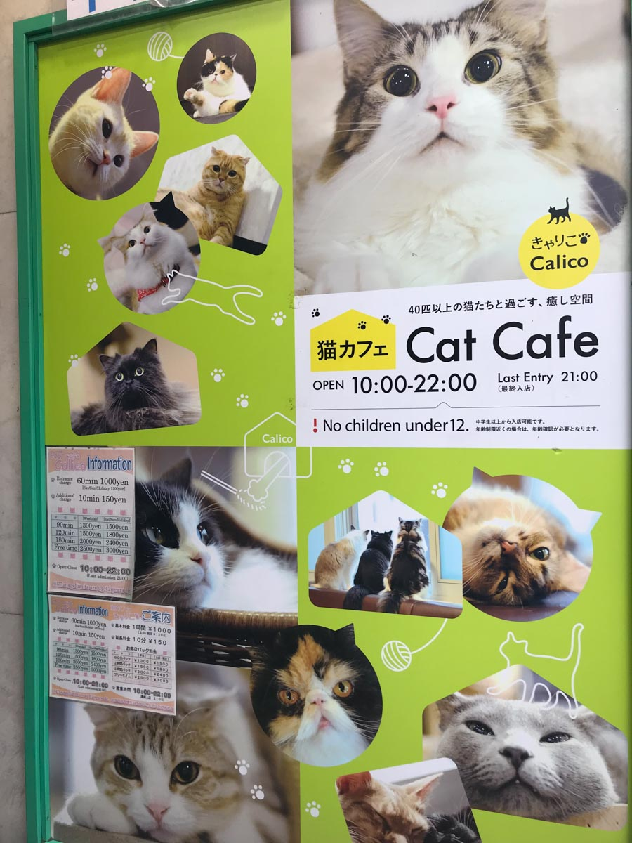 Cat Cafe in Tokyo