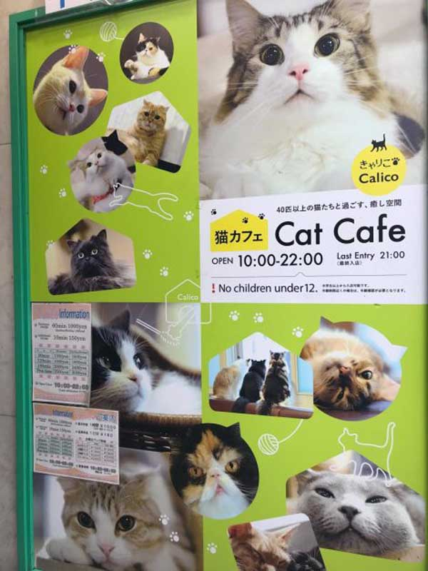 Must do in Tokyo | Cat Cafe