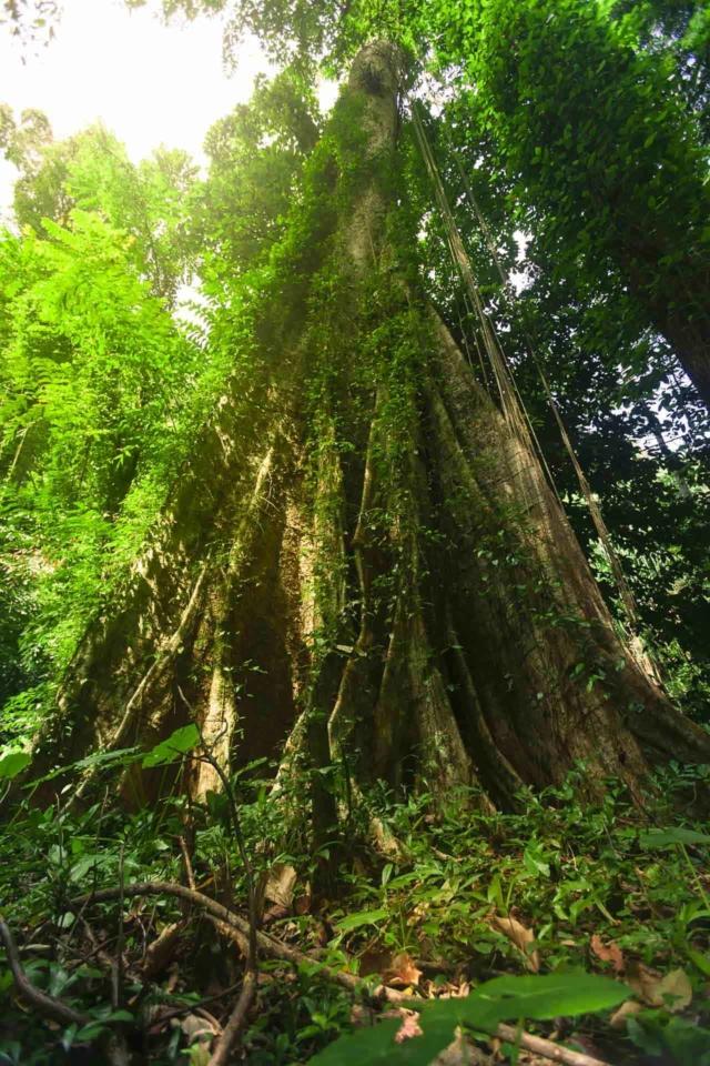 jungle tour national park phuket