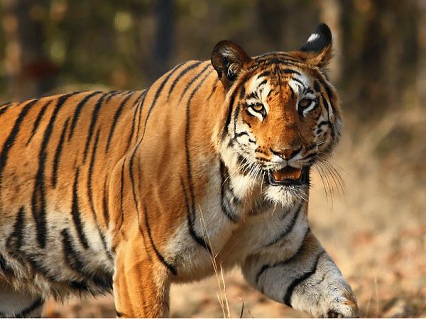 Very short essay on wildlife conservation