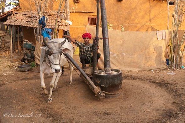 Udaipur-Festival- Rajasthan-10