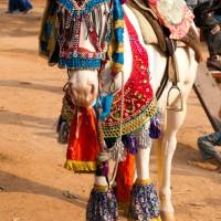 Udaipur-Festival-Rajasthan-2.jpg