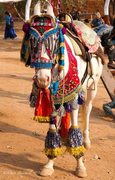 Shilpgram Arts Festival in Rajasthan