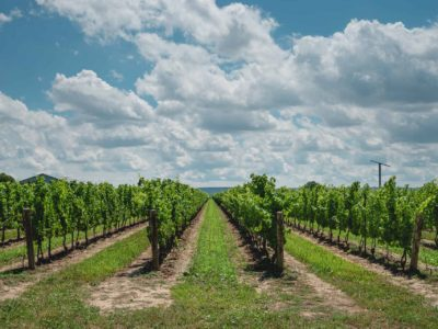 Things to do in Prince Edward County, Ontario