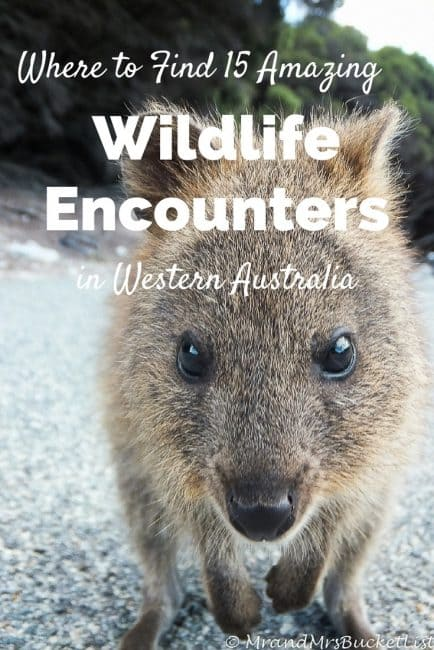 Where to Find 15 Amazing Wildlife Encounters in Western Australia