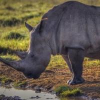 White-Rhino-Kenya-1024-768