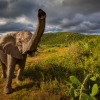 Wildlife-South-Africa-21-XL