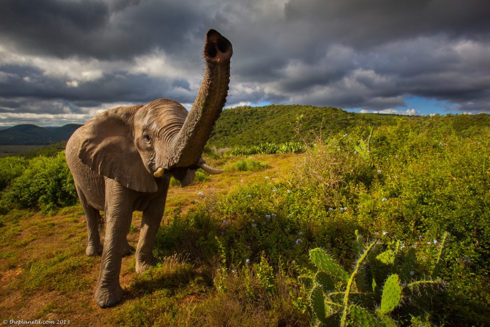 South African Wildlife South Africa TravelChannel.com