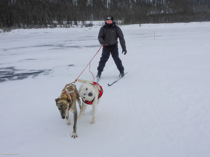dave controlling dogs skijoring