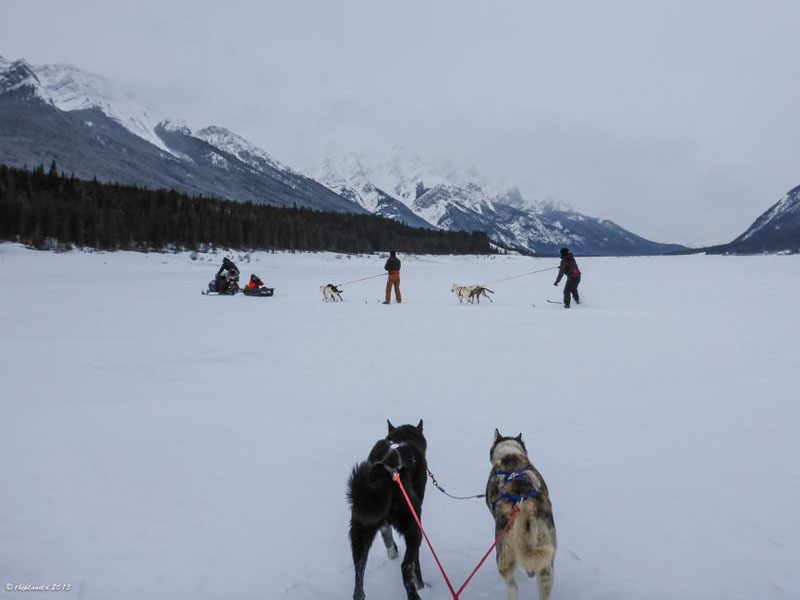 group skijoring