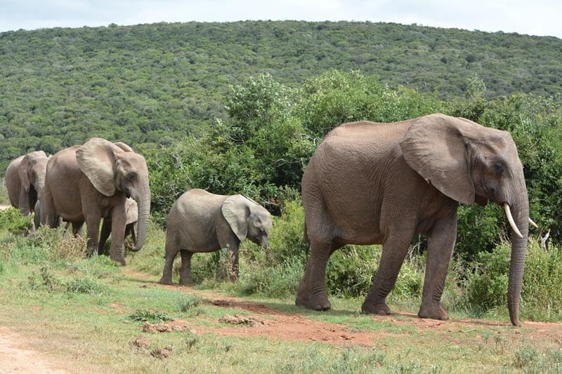 addo national park south africa