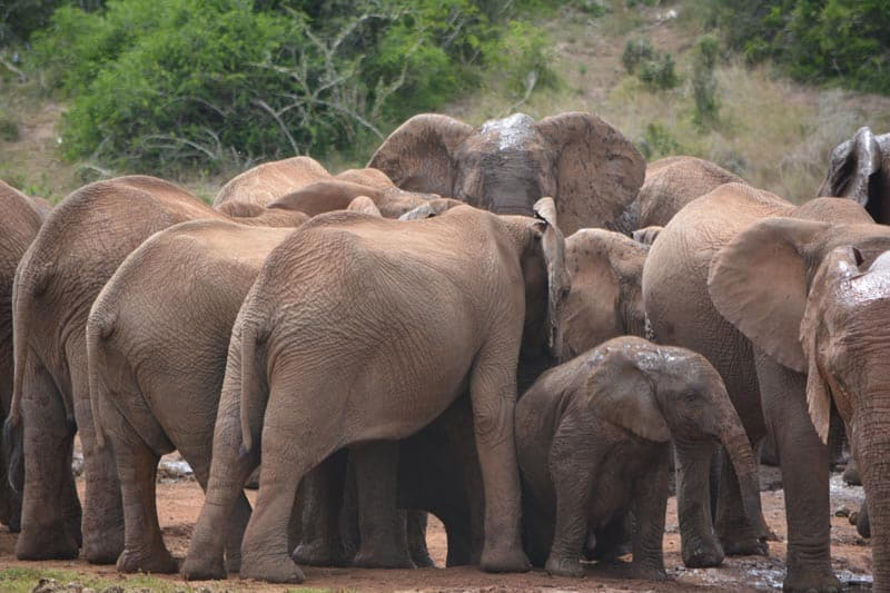 addo elephant national park featured image