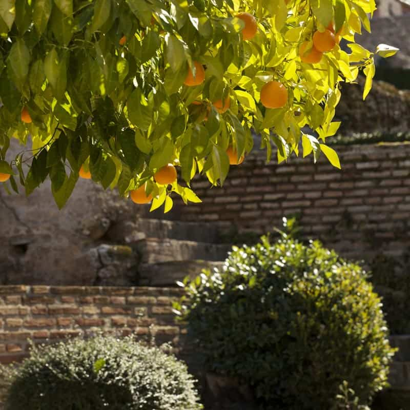 things to do in andalusia orange trees