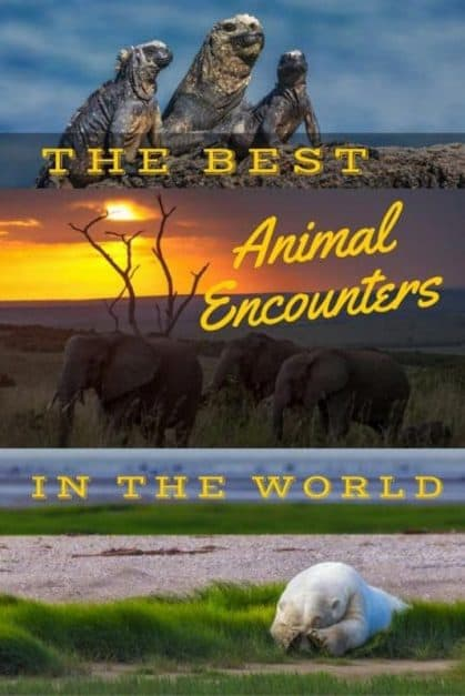 the very best animal encounters from around the world