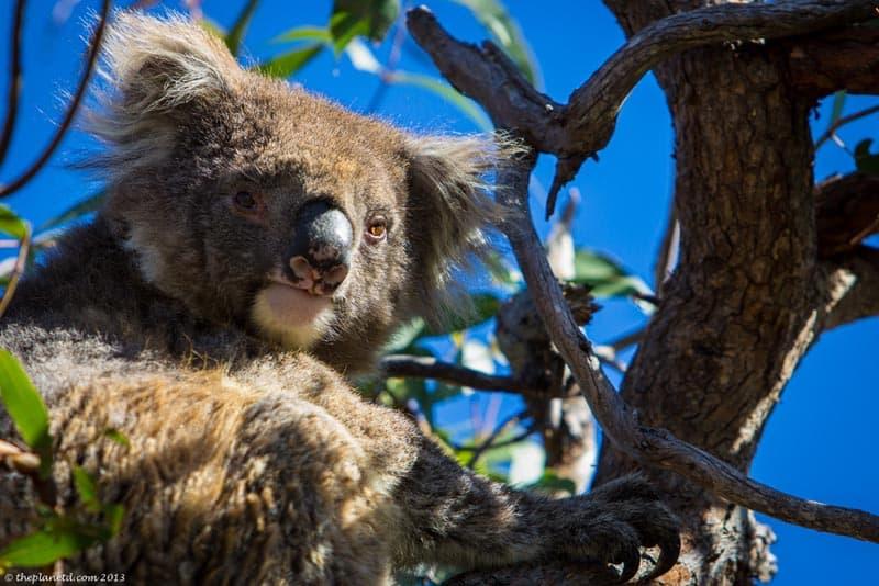wildlife encounters australia