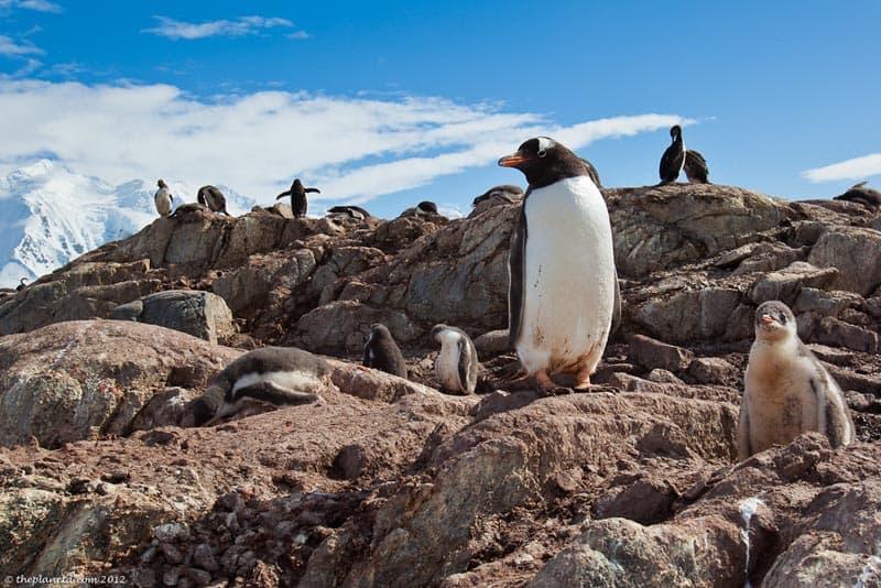 wildlife encounters antarctica penguins