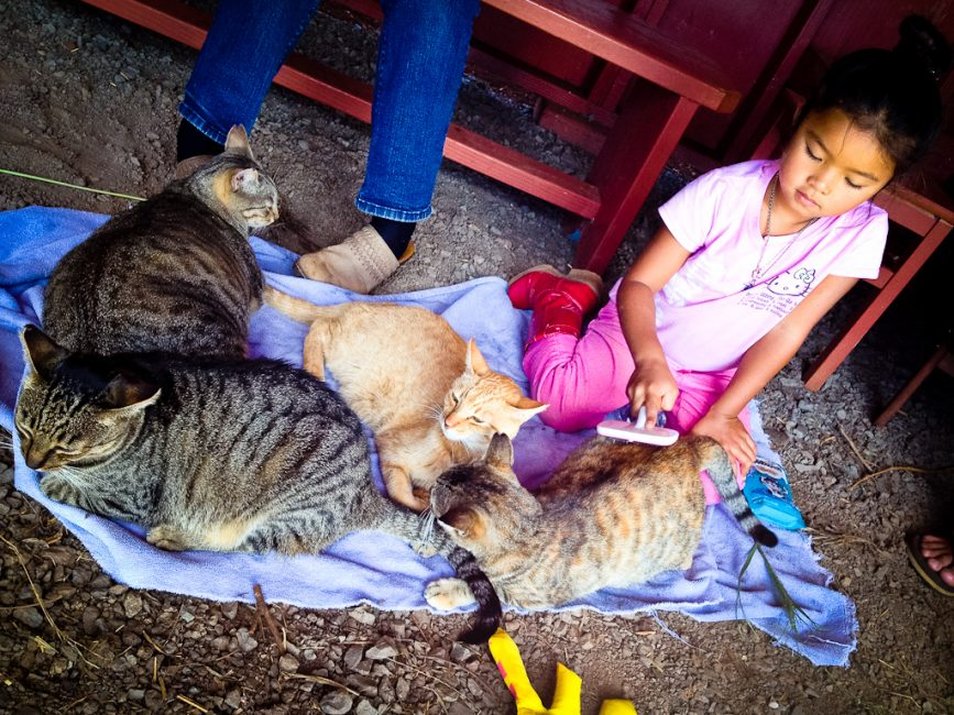 young girl grooming cats